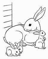 Rabbit Coloring Pages Bunny Printable Bunnies Animal Easter sketch template