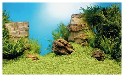 poster de fond aquarium juwel aquarium background poster