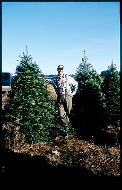 growing christmas trees american profile