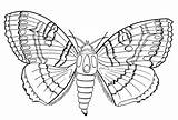 Coloring Moth Pages Butterfly Summer Results sketch template