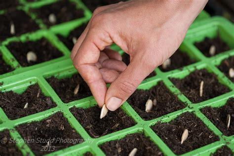 planting pumpkin seeds stephen studd garden photographer s association
