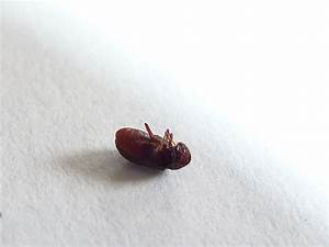Kleine Braune Käfer Im Haus : k fer im schlafzimmer identify a bug actias ~ Lizthompson.info Haus und Dekorationen