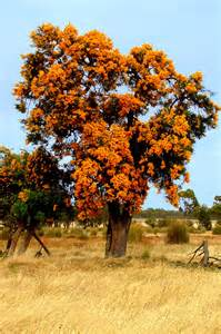 christmas tree a photo from western australia west trekearth
