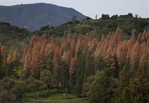 Study: 58 million dry California trees threatened by ...