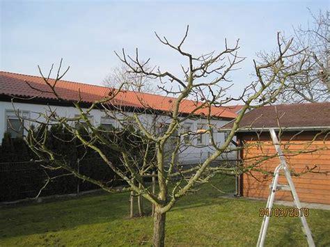 Garten Und Landschaftsbau Coburg by Coburg Beetpflege Unkraut Baumpflege Uwe Knauer Gartenbau