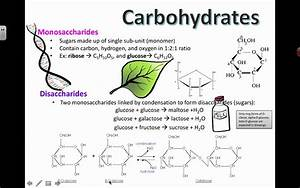 Carbohydrate Structure  2016  Ib Biology