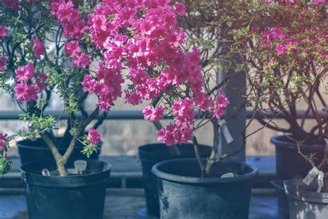 Winterharte Pflanzen Kübel balkonpflanzen im k 252 bel 187 winterharte topfpflanzen