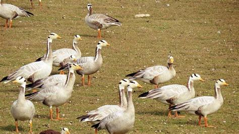 najafgarh lake sees fall in migratory birds after dry winter