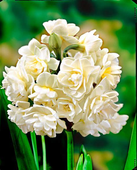 7 iecienītākie ziedi šajā dārzkopības sezonā | Praktiski.lv