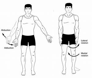 Anatomical Terms Of Movement - Flexion
