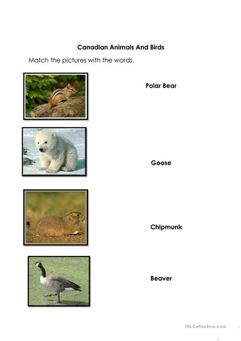 canadian animals birds worksheet  esl printable