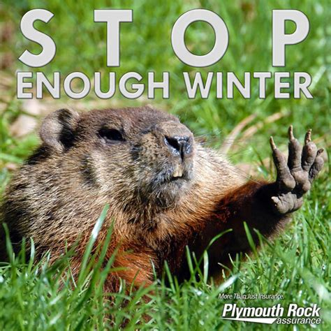 Groundhog Memes - pics groundhog day punxsutawney phil sees his shadow hollywood life
