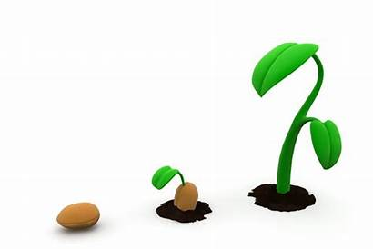 Plant Growth Growing Plants Seed Animation Phases