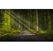 Trees Road Forest Nature Sun Rays Wallpapers HD