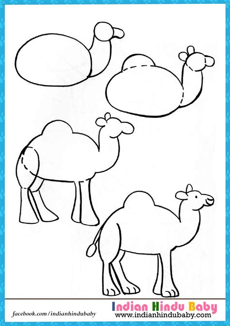 drawn camels  kid step  step animal pencil