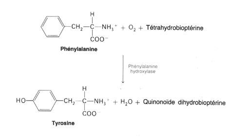 phenylalanine hydroxylase junglekeyfr image