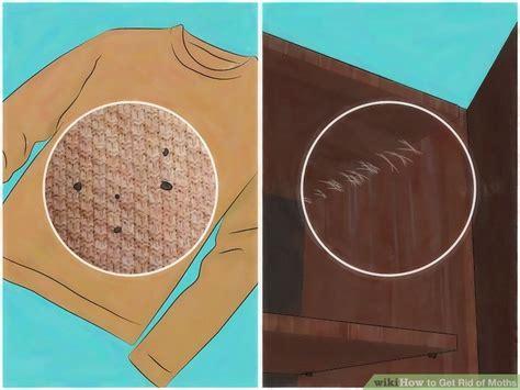 ways   rid  moths wikihow