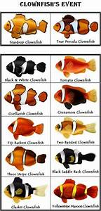 1000 Images About Marine To Get On Pinterest Clownfish