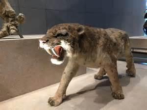 Saber Tooth Tiger Found Frozen