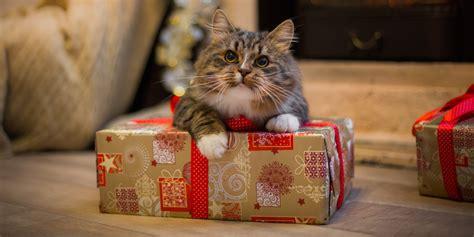 how to de stress you cat 5 ways felines help de stress our lives world s best cat litter