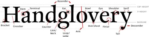 learning typography anatomy of a typeface