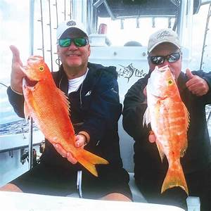 Mike And Harvey From Sc With Some Beautiful Yellow Eye