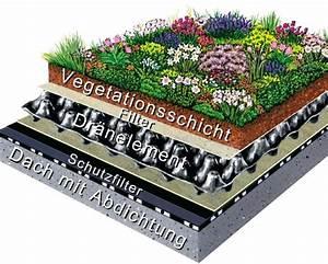 Extensive Dachbegrünung Aufbau : dachbegr nung seite 2 ~ Whattoseeinmadrid.com Haus und Dekorationen