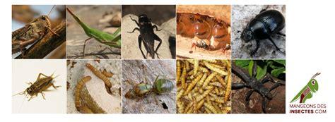 insectes cuisine défi cuisine insectes