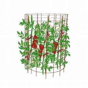 Comment Tuteurer Les Tomates : tuteurer les tomates choix des piquets et techniques ~ Melissatoandfro.com Idées de Décoration