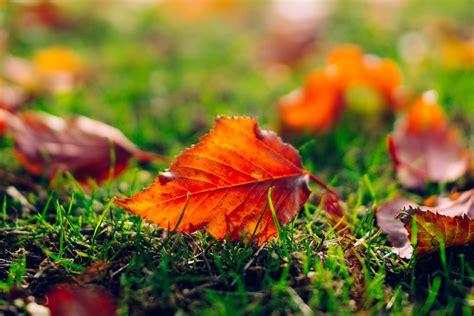 leaf leaves orange grass nature macro