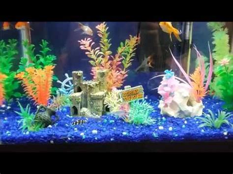 Ideas For Fish Tank by Happy Fish At Play Freshwater Aquarium Design Ideas 10