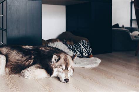 Putztipps Fuer Den Haushalt Mit Hund by Meine 9 Tipps F 252 R Einen Sauberen Haushalt Mit Hund