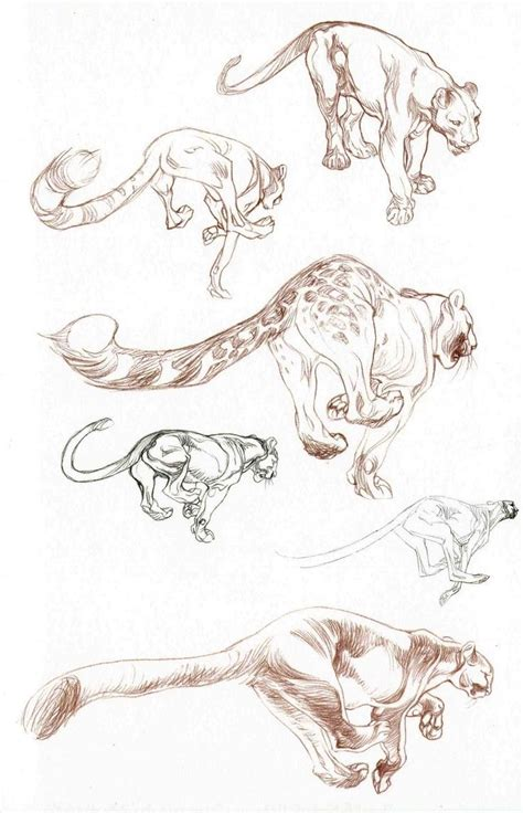claire wendling fauna real drawing animals