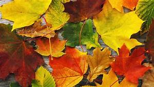 20, Amazing, Facts, About, Fall, Leaves