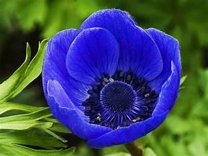 Blue flower wallpaper download free blue flower blue ...