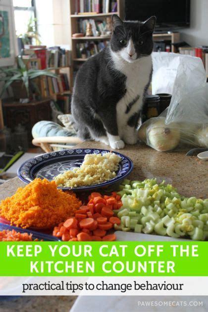 cat   kitchen counter cat health