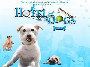 Hotel Pour Chien : hotel pour chiens wallpaper hotel pour chiens ~ Nature-et-papiers.com Idées de Décoration