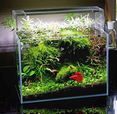 aquascape fish tank oliver knott beta tank oliverknott bettascape