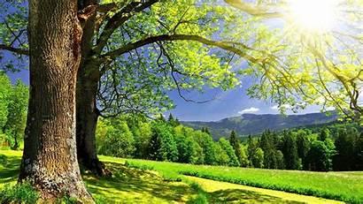 Summer Desktop Wallpapers Sunshine Backgrounds Spring Nature