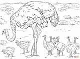 Ostrich Coloring Chicks Pages Colouring Printable Horse Animals Supercoloring Drawing Ostriches Drawings Main Paper Template Templates Sketch sketch template