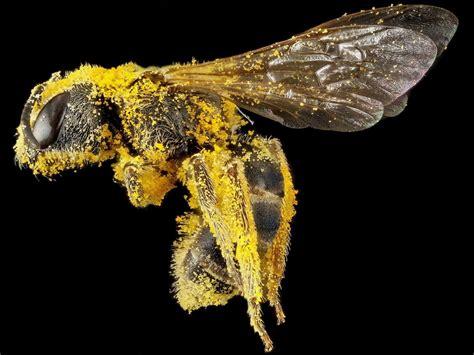 papel juegan las abejas en la polinizacion