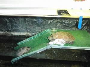 Aquarium Selber Bauen Plexiglas : verkaufe 3 wasserschildkr ten mit komplettem zubeh r ~ Watch28wear.com Haus und Dekorationen