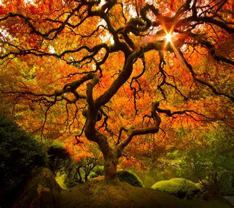 Fall Backgrounds Spooky by Photo Quot Spooky Tree Quot In The Album Quot Nature Wallpapers Quot By