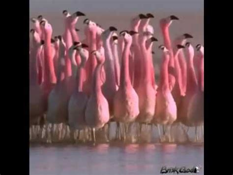 flamingo squad vine youtube