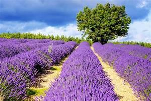 Lavendel Schneiden Im Herbst : lavendel ~ Lizthompson.info Haus und Dekorationen