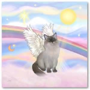 rainbow bridge for cats the farewell options after your pet dies