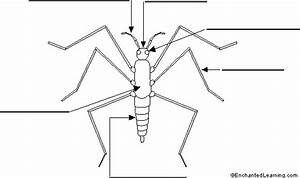Label The Insect Printout