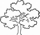 Tree Oak Drawing Coloring Trees Awesome Line Pecan Mahogany Getdrawings Template Drawings Sketch Designlooter Luna 533px 82kb Colorir Para sketch template
