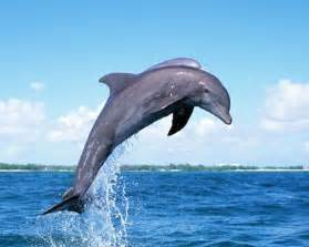 Whales Dolphin Jumping Out of Water