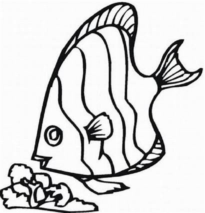 Fish Coloring Pages Rainbow Tropical Clipart Octopus